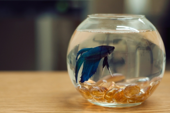 fish(27)web