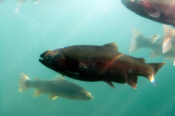 fish(299)web