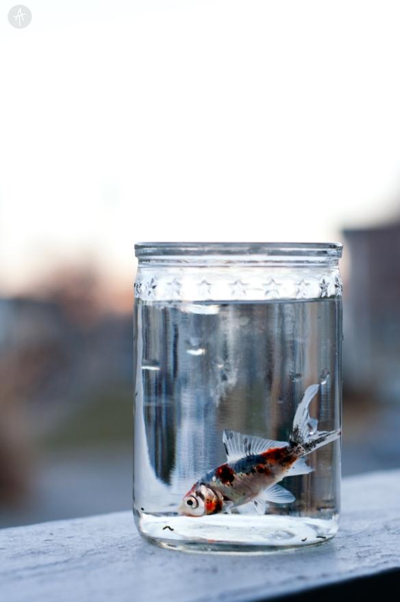 fish(33)fixweblogo