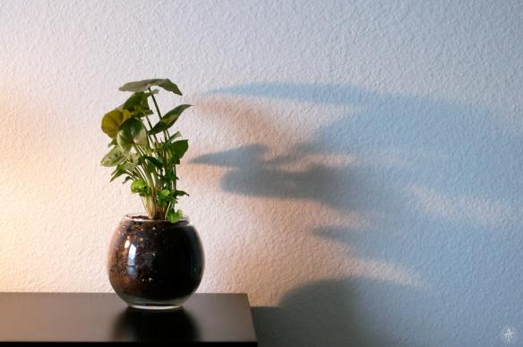 plant(51)weblogo