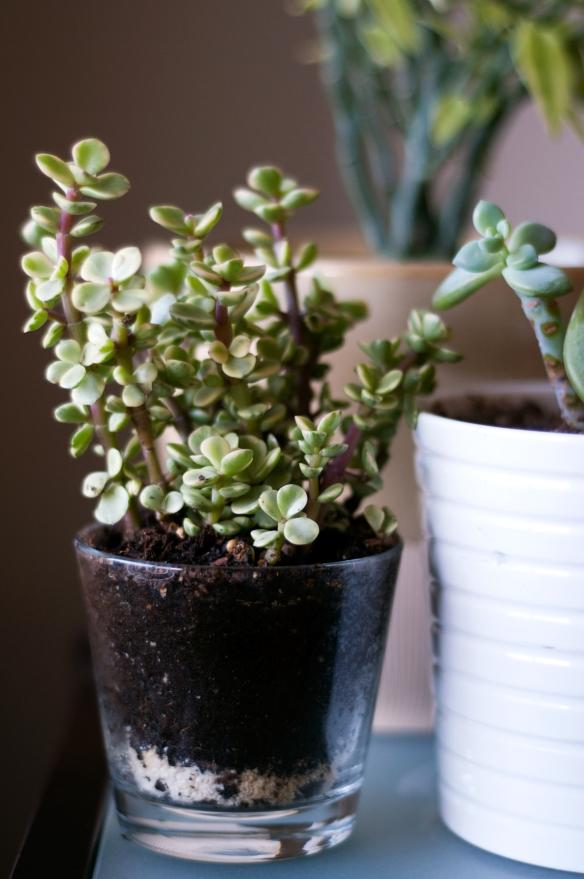 plants(4)web