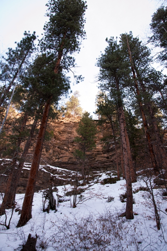 trees(389)web