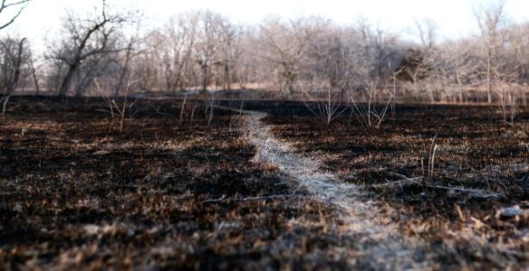 burnweb