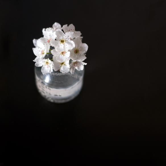 flower(80)web