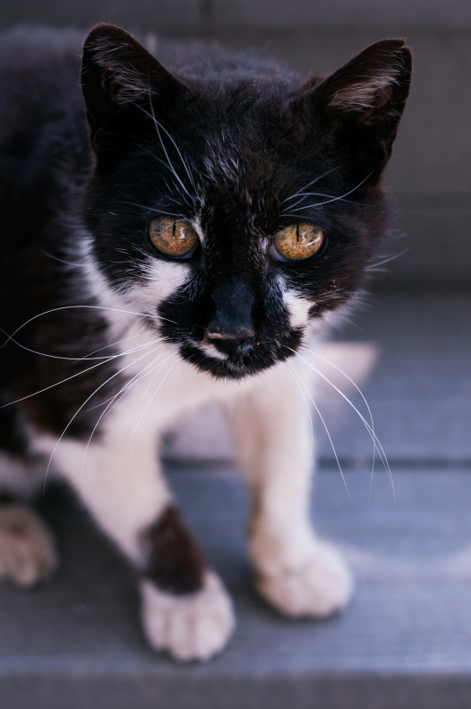 cat(728)web