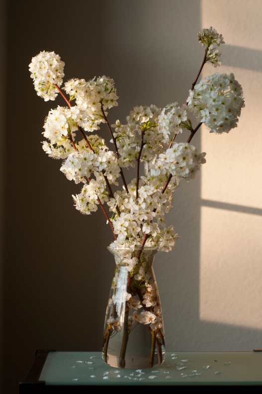 flowers(407)web