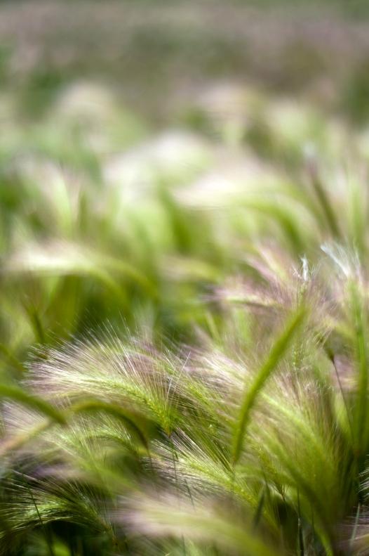 grass(831)web