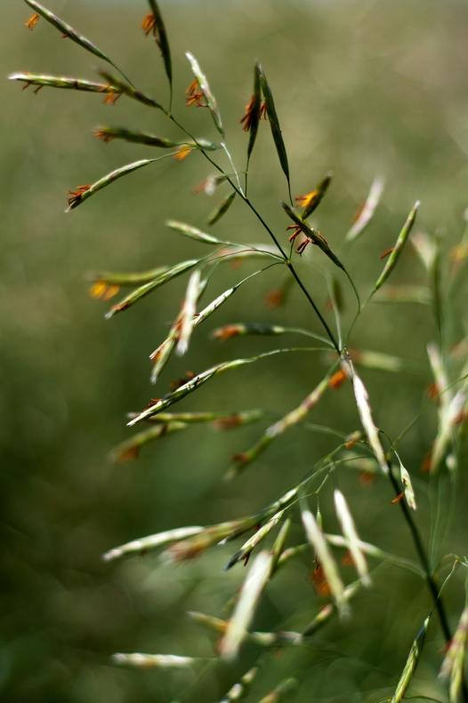 grass(886)web