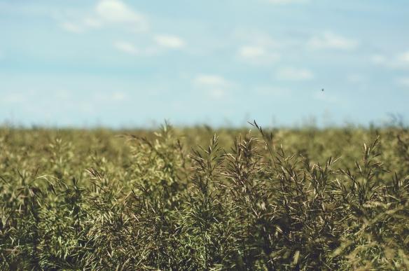 hay(869)web