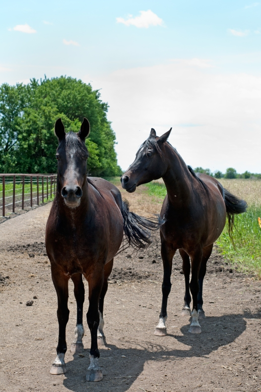 horses(845)web