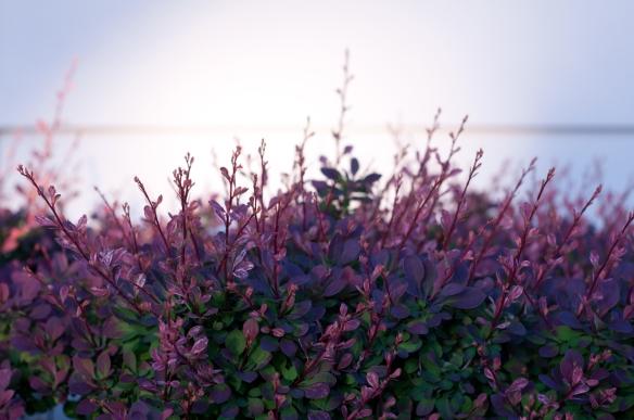 plants(279)web