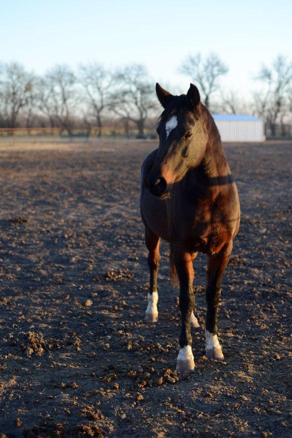 horse(1171)web