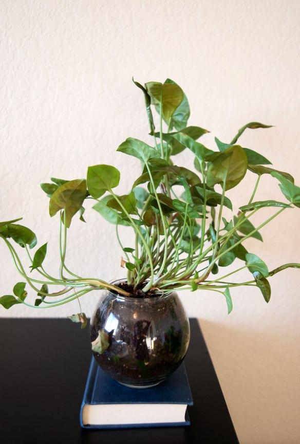 plant(1598)web