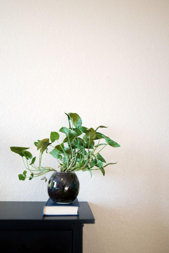 plant(1599)web