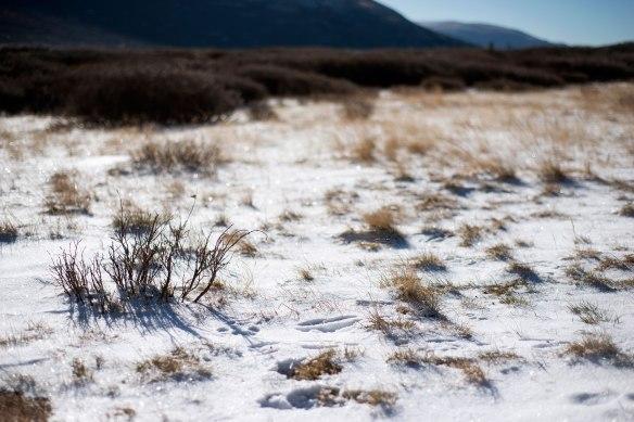 snow(244)web