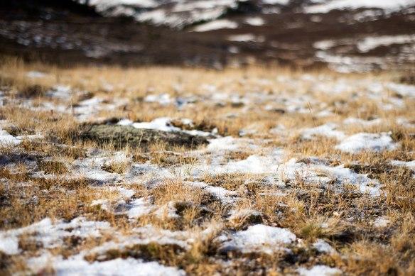 snow(294)web