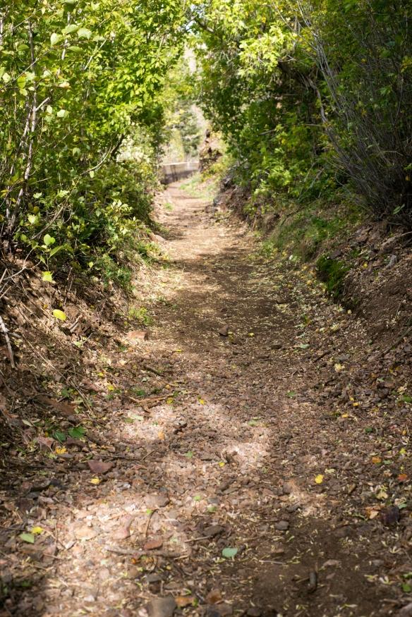 trail(127)web